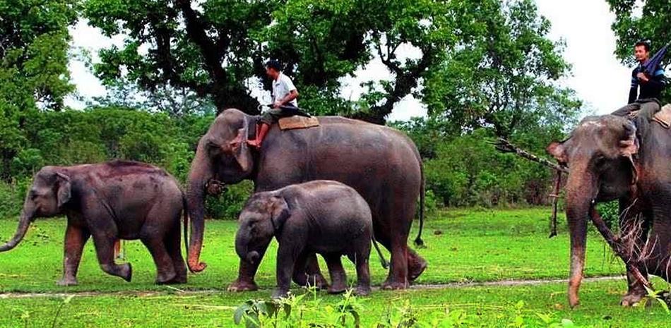Parsa Wildlife Reserve Safari